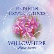 Deréce (Chamaenerion angustifolium – Willowherb) Findhorn Virágeszencia 15ml.