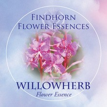 Willowherb Findhorn Flower Essence 15ml.