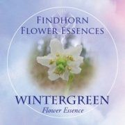 Kiskörtike (Moneses uniflora – Wintergreen) Findhorn Virágeszencia 15ml.