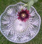 Deep Magenta Opium Poppy Research Series Indigo Essence