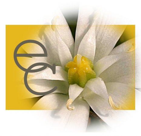 Egyénre szabott virágeszencia-keverék