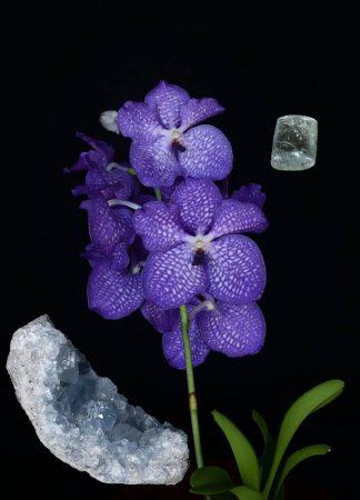 Orchidea Víz Elem eszencia
