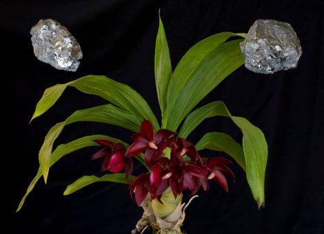 Orchid Metal Element