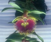 Core of Being orchidea eszencia