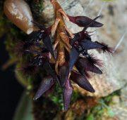 Hive of Heaven orchidea eszencia