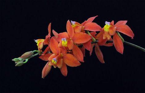 Just Me orchidea eszencia