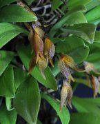 Soul's Grief Release orchidea eszencia - ANYAESZENCIA!