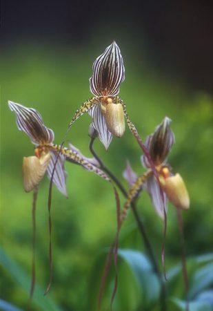 Walking to the Earth's Rhythm orchidea eszencia