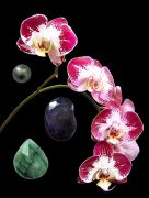 Love's Gift orchidea eszencia