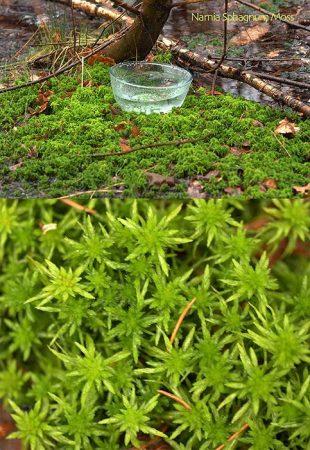 Narnia Sphagnum Moss Essence
