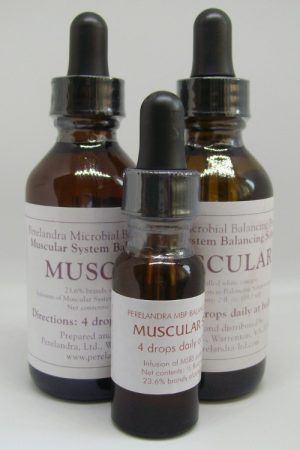 Muscular System (MSBS)